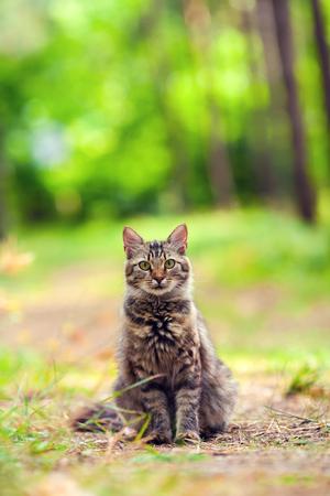 cute bi: Cat sitting in the forest