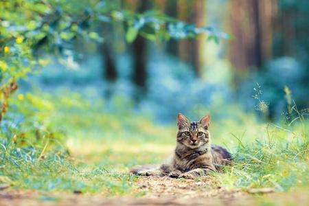 cute bi: Cat lying in the forest