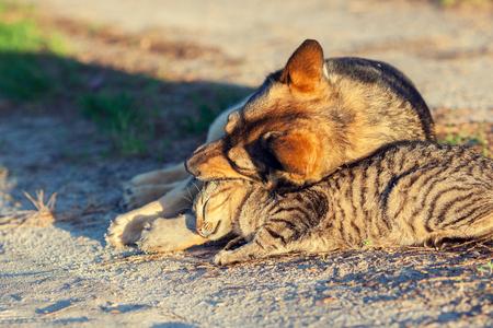 mejores amigas: Perro y gato que se relajan al aire libre en verano