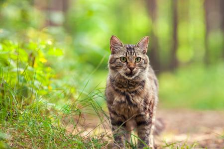cute bi: Cat walking in the forest in summer