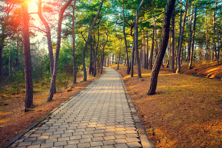 pathway: Pathway in the autumn park