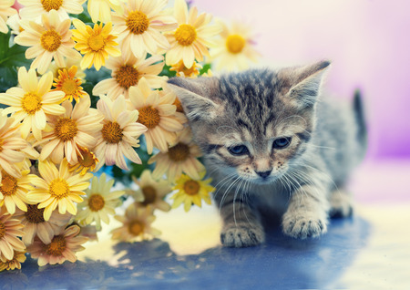 hesitant: Portrait of the little kitten with flowers outdoors