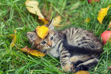 Little kitten lying on the grass with fallen leaves Stock Photo