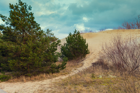 a slope: Parnidis dune slope in autumn, Neringa, Lithuania