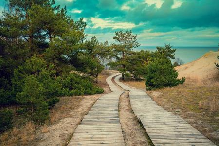 pathways: Two wooden pathways in park