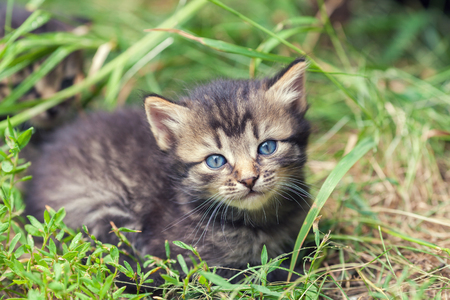 cute bi: Little kitten lying on the grass