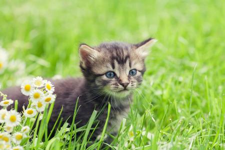 cute bi: Little kitten walking in the grass