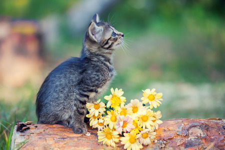 cute bi: Kitten sitting on a log next to flowers Stock Photo