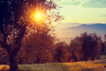 valdorcia: Sunset in the mountains.