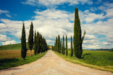 valdorcia: Cypress alley in Tuscany, Italy
