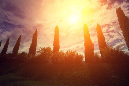 valdorcia: Cypress valley at sunset, Tuscany, Italy