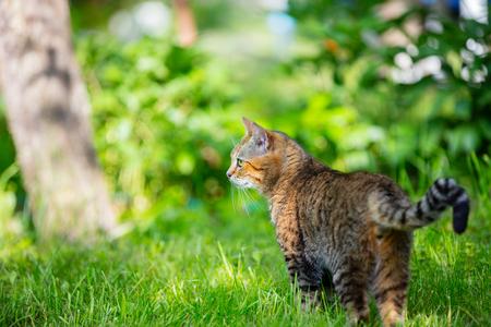 cute bi: Cat staying in a grass in the garden