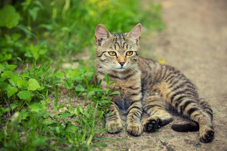 cute bi: Striped kitten lying on the path in the garden