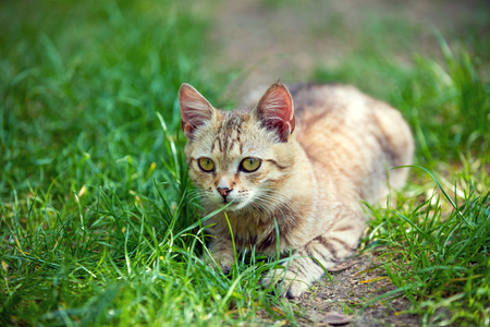cute bi: Cat relaxing on the grass Stock Photo