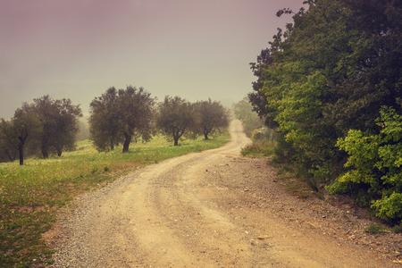 valdorcia: Foggy autumn rural landscape. Dirt road in olive plantation