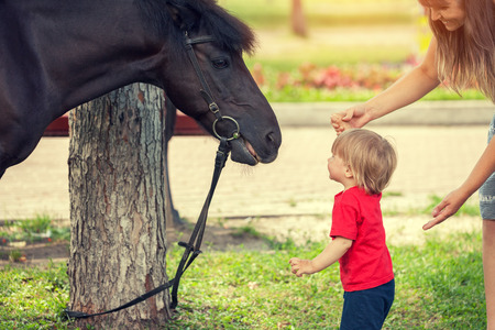 herdsman: First meeting with horse. Happy little boy and horse looking to each other. Mother holding hand her sun Stock Photo