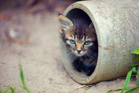 cute bi: Stray kitten peeking out of a pipe