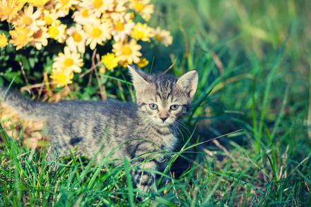 Little kitten walking in the garden Stock Photo