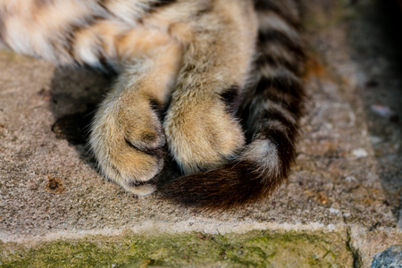 hind: Hind legs and tail of cat, sleeping on concrete block Stock Photo