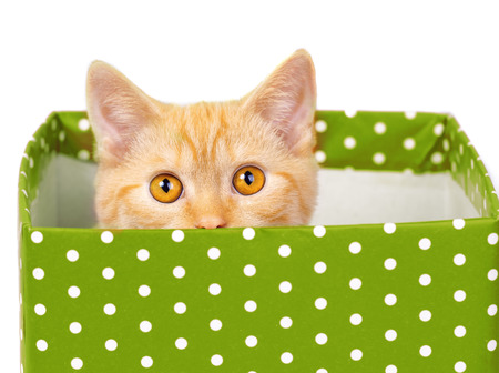 look out: Cute kitten look out of the green gift box Stock Photo