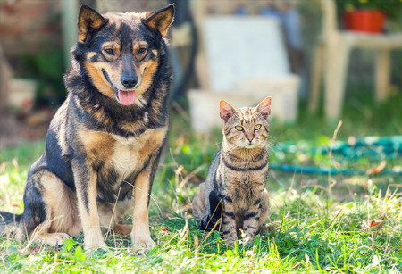 Cat and dog sitting together in the yard Stock Photo