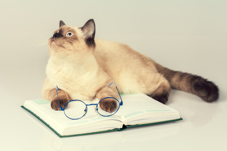 Cute business cat with glasses, lying on the notebook (book) Stock Photo