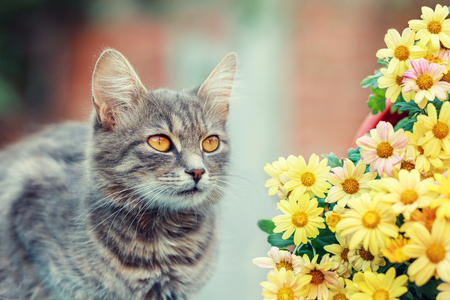 flowers cat: Cute cat with flowers in the garden Stock Photo