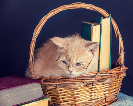 pussy: Cute red kitten wearing glasses, sitting in a basket with books