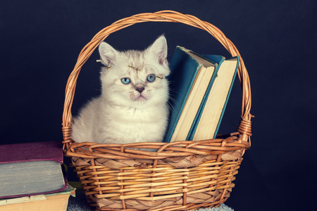 Cute kitten wearing glasses, sitting in a basket with books
