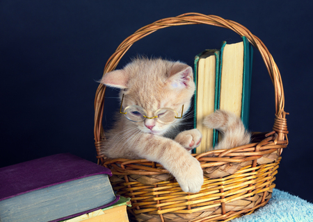 Cute red kitten wearing glasses, sitting in a basket with books