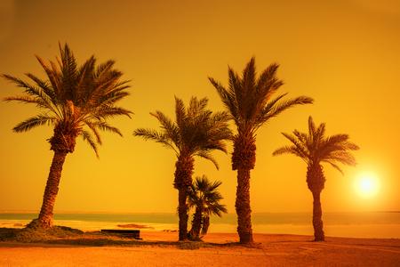 orange sunset: Orange sunset over palm trees