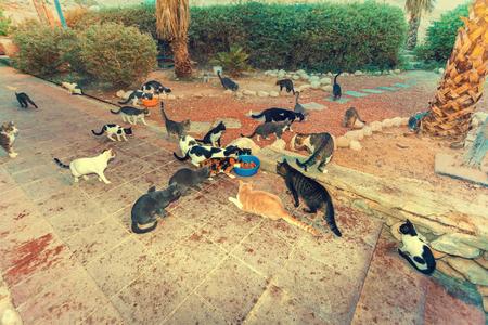 Many stray cats outdoor in park