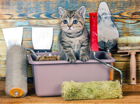 washbowl: Cute little kitten sitting in washbowl with tools for repair