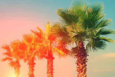 Row of tropic palm trees against sky at sunset light Stock Photo