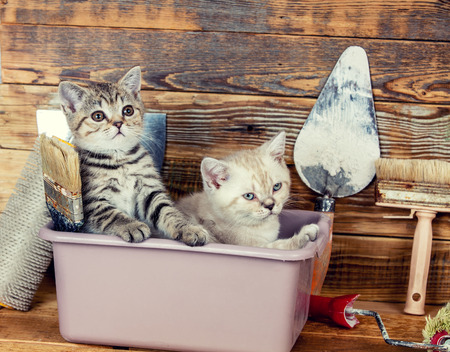 washbowl: Two little kittens sitting together in washbowl with tools for repair