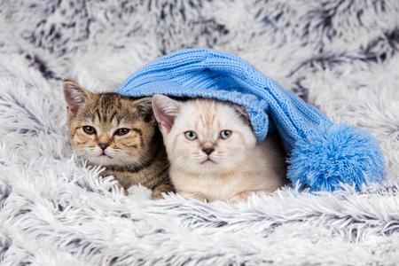 le cap: Dos pequeños gatitos que llevan tapa grande acostado sobre una manta suave y esponjosa Foto de archivo