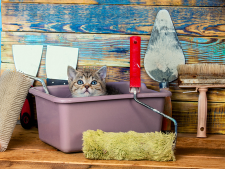 washbowl: Cute little kitten sitting together in washbowl with tools for repair
