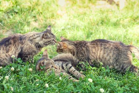 many babies: Three kittens on the grass Stock Photo