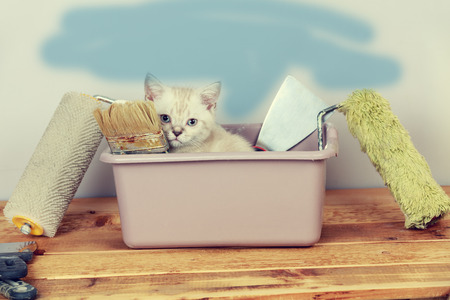 washbowl: Cute little kitten sitting in washbowl with tools for renovation