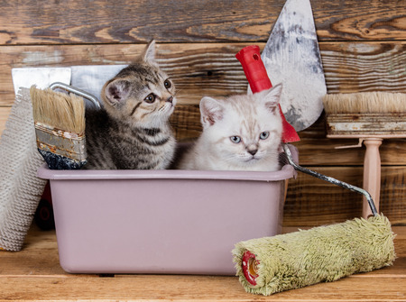 Two lute little kittens sitting in washbowl with tools for renovation