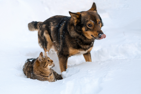 stray: Cat and dog best friends. Cat and dog playing together outdoor on the snow in winter Stock Photo