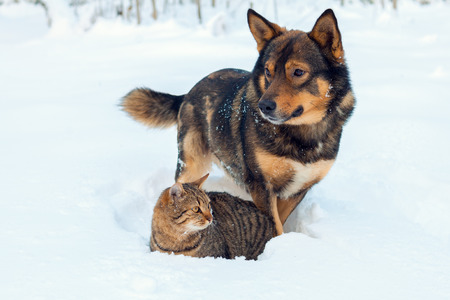 Cat and dog best friends. Cat and dog playing together outdoor on the snow in winter Stock Photo