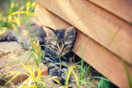 Cute little kitten lying in the yard near grunge wooden wall