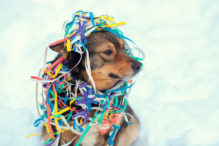 Portrait of a dog entangled in colorful serpentine. Dog walking in the snow outdoor Stock Photo