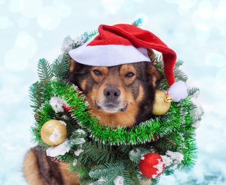 Portrait of a dog wearing christmas wreath and Santa hat sitting outdoors in snow