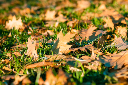 Autumn leaf litter for background Stock Photo