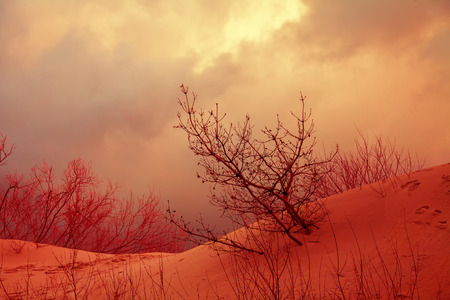 Dramatic autumn landscape with sandy dune, trees and cloudy stormy sky Stock Photo