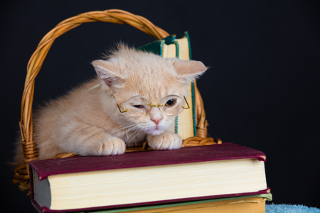 Cute business little kitten wearing glasses lying on a book