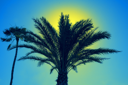 Silhouette of palm trees against sky at sunset