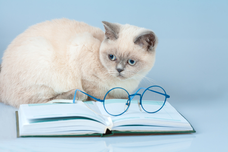 Cute business clever cat with glasses, lying on the notebook (book) Stock Photo